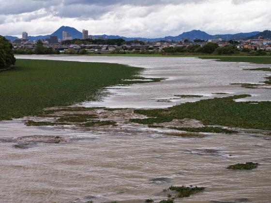 水かさが増えすぎの草津川